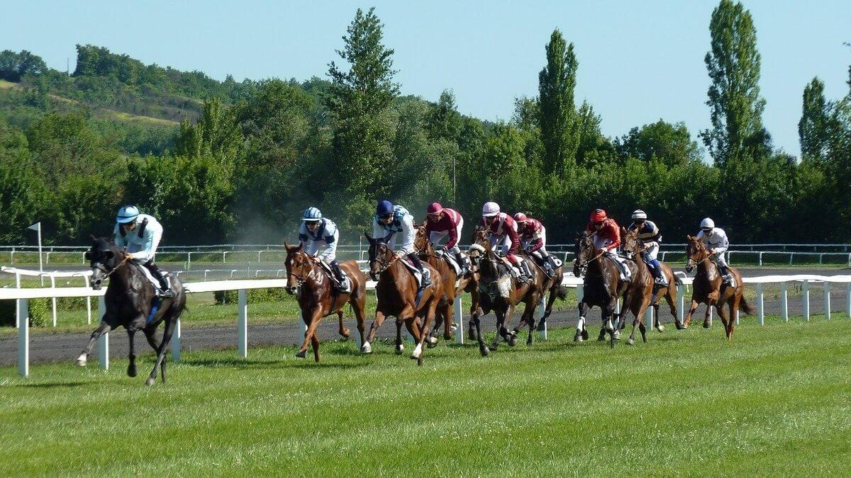 Tipp hest odds på hesteløp